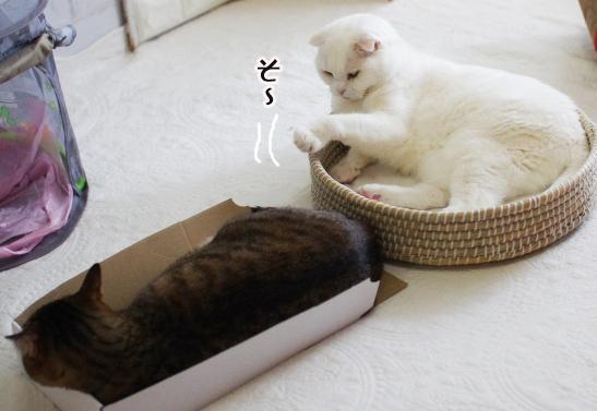 dfdddddっでっうぇうぇうぇコピー