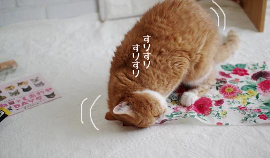いおいdふぃdfdfdのコピー