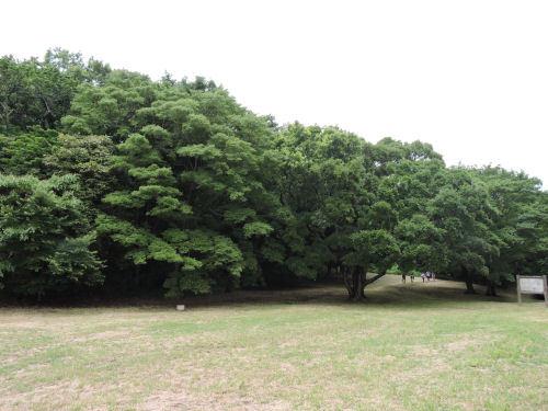190706ichikawa37.jpg