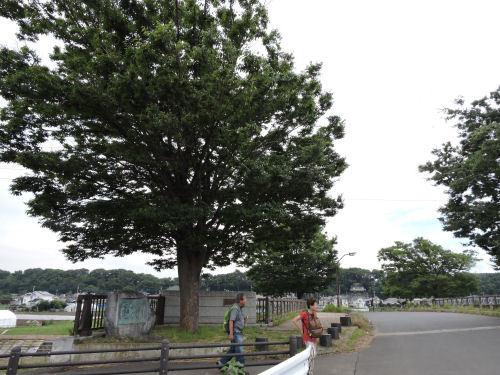 190708yagiri12.jpg