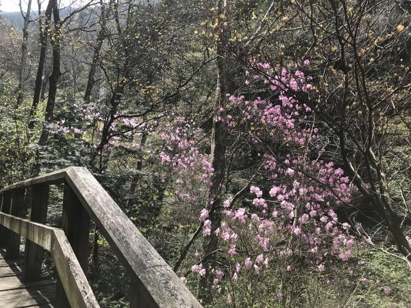 190505-かしも山歩倶楽部2019春 (2)