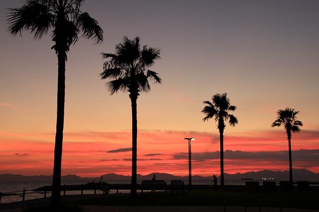 s-焼野海岸(椰子の木)