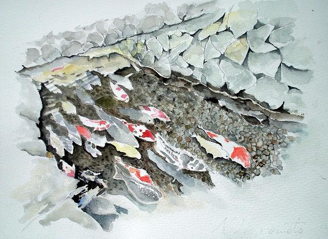 s-津和野の鯉(水彩画)