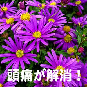 頭痛,大阪,堺,神戸,京都