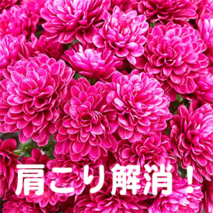 肩こり,首痛,京都