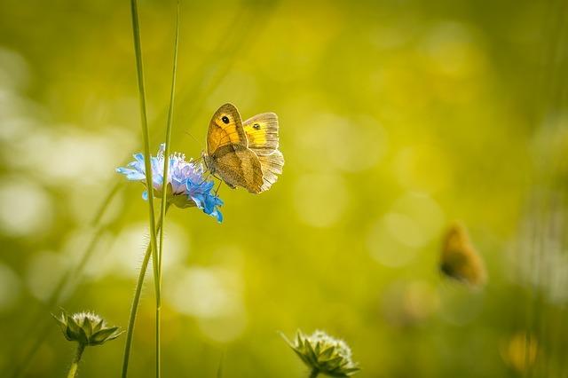 meadow-1622940_640.jpg