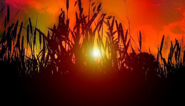 sun-519958_640.jpg