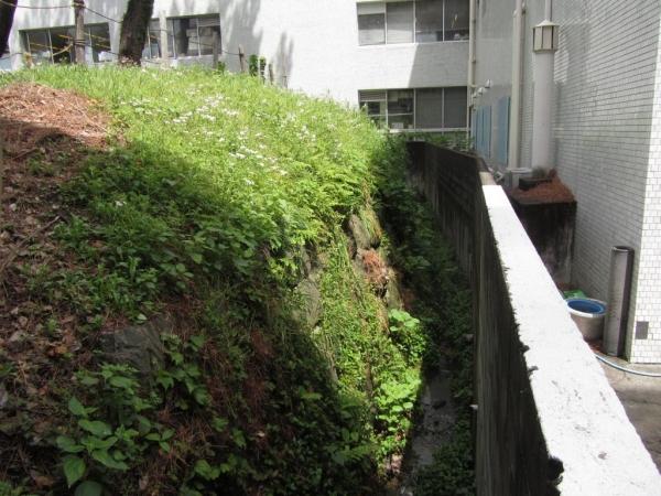 小田原城外堀跡東辺の石垣