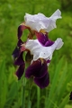s-庭の花6_11 (4)