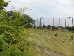 20190616本郷公園000.JPG