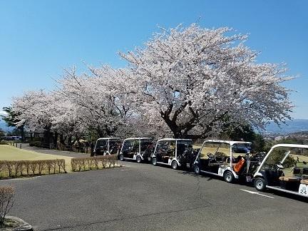 201904 ゴルフ&桜