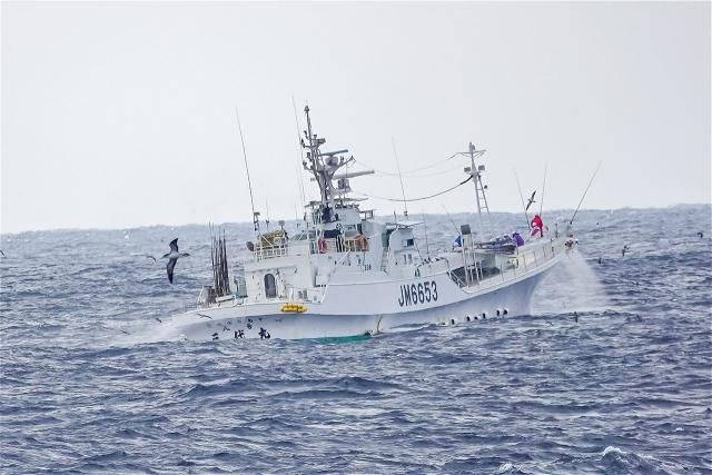 オオミズナギドリと漁船