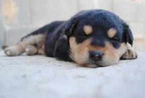 寝てる子犬