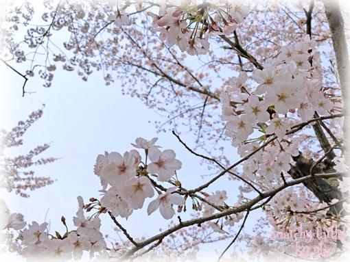 190407_hanami002s.jpg