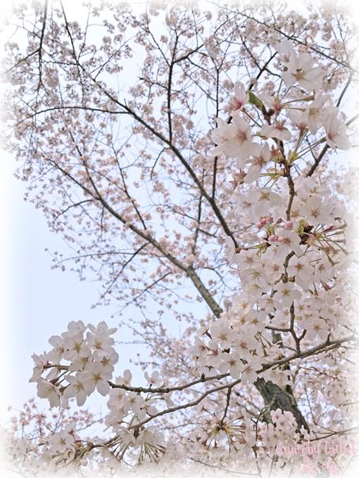 190407_hanami003s.jpg
