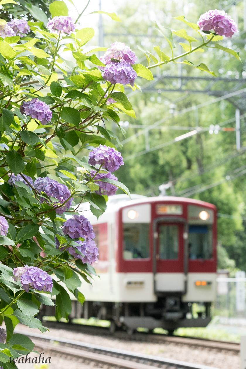 010616kintetsu-5.jpg