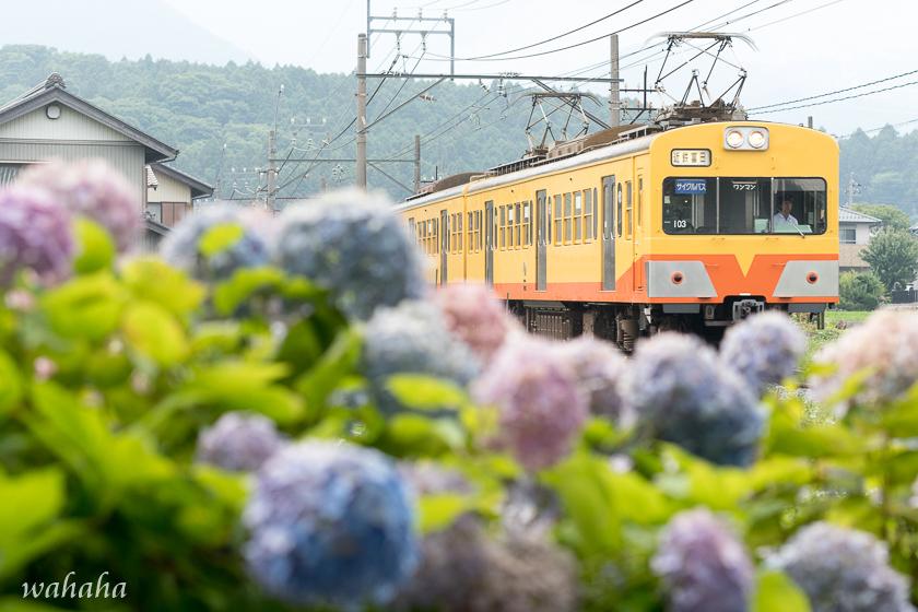 010629sangi-2.jpg