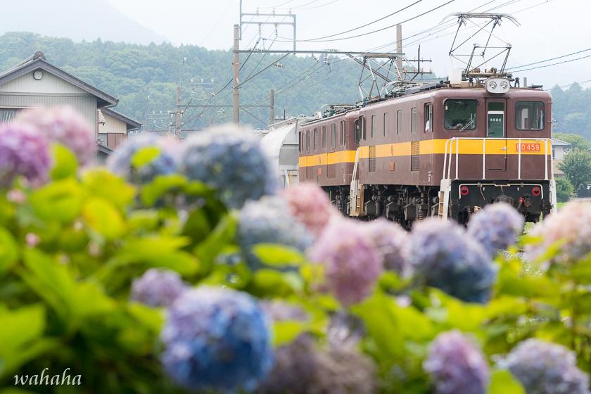 010629sangi-3.jpg