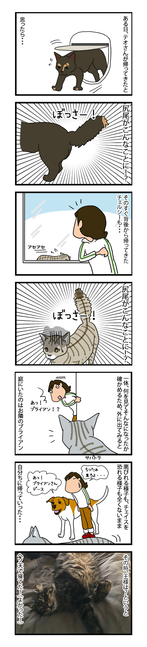 05082019_cat6koma.jpg
