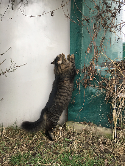 06082019_cat3.jpg