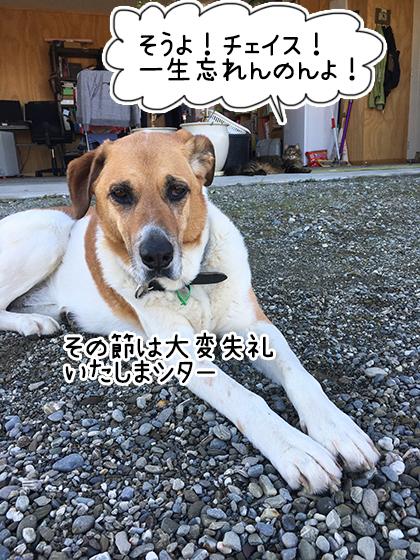 12082019_cat1.jpg