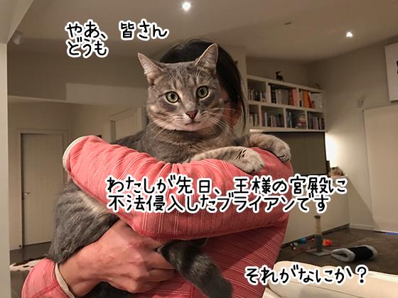 12082019_cat2.jpg
