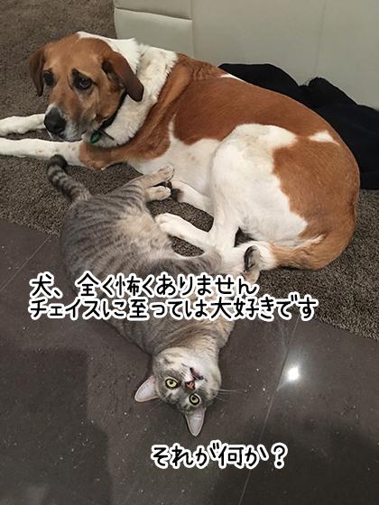12082019_cat3.jpg