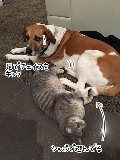 12082019_cat4.jpg