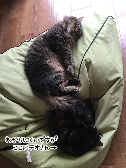 14072019_cat1.jpg