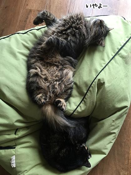14072019_cat2.jpg