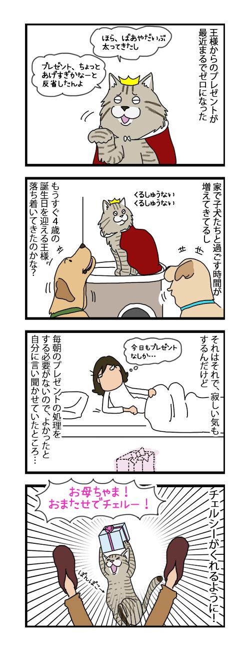16072019_cat4koma.jpg