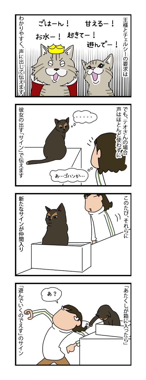 18072019_cat4koma.jpg