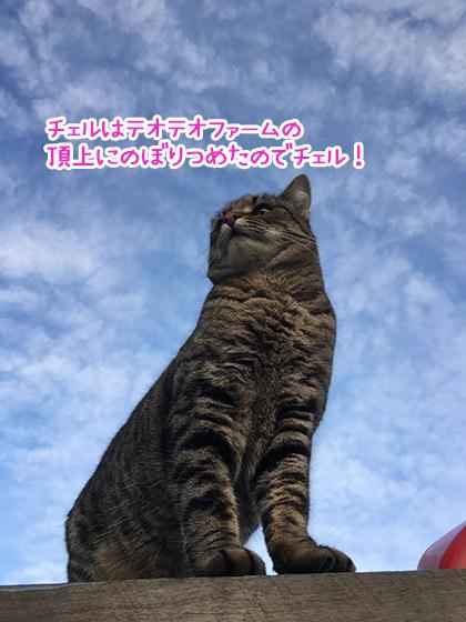 21072019_catpic1.jpg