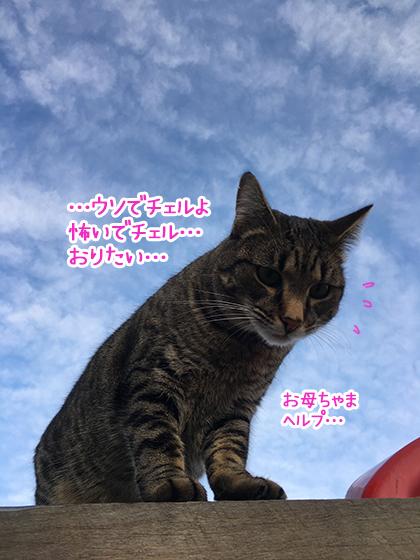 21072019_catpic2.jpg