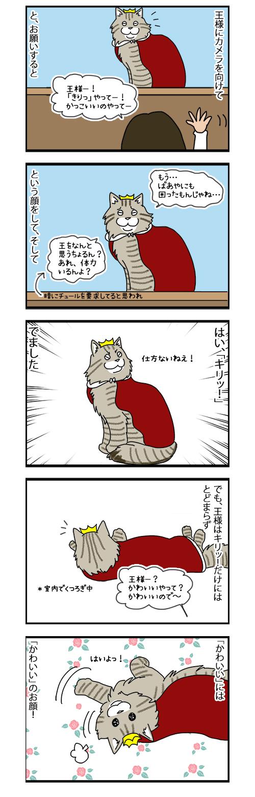 22072019_cat5koma.jpg