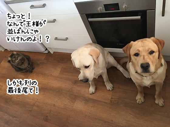 22082019_cat1.jpg