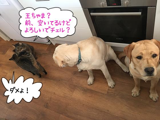 22082019_cat3.jpg
