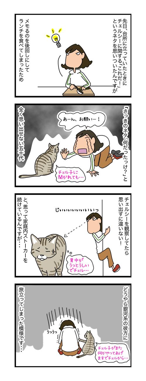 25072019_cat4koma.jpg