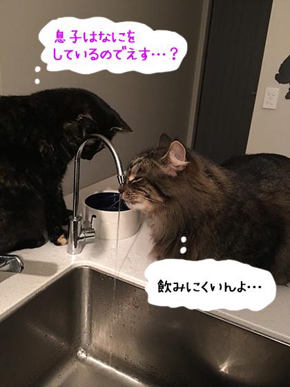 29072019_cat1.jpg
