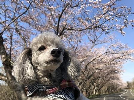 お花見②(20190508)