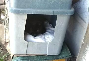 においが消えた外猫ハウスで寝る黒猫「じぇい」