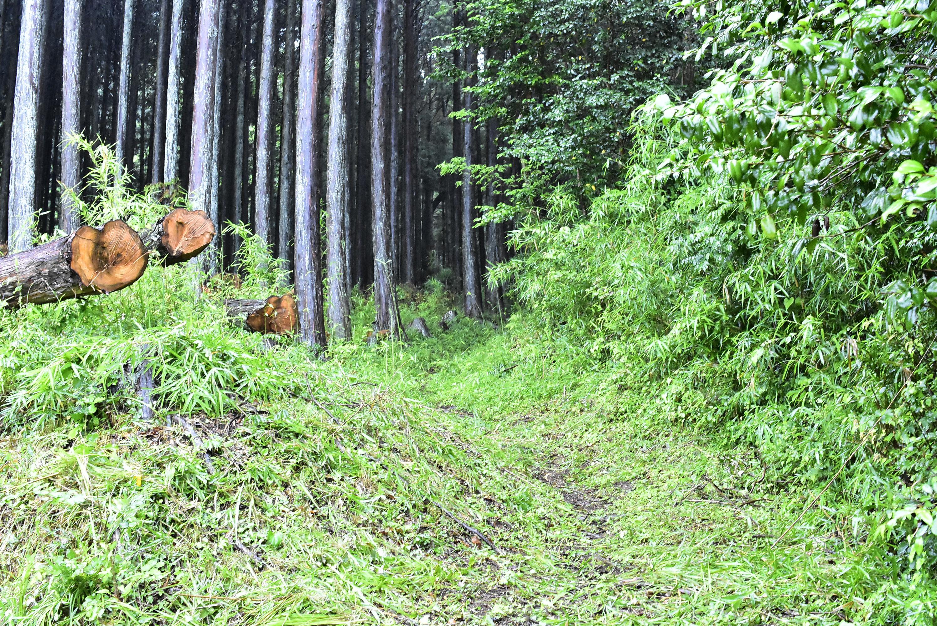 伏馬田 ここから本格的な山へ