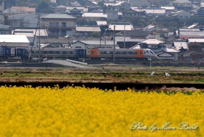 菜の花と列車 愛媛県西条市西泉新開