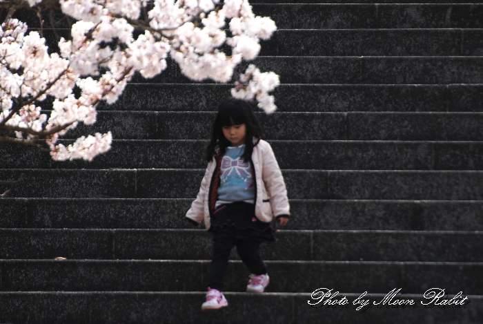丹原総合公園 桜と少女 愛媛県西条市丹原町久妙寺甲244