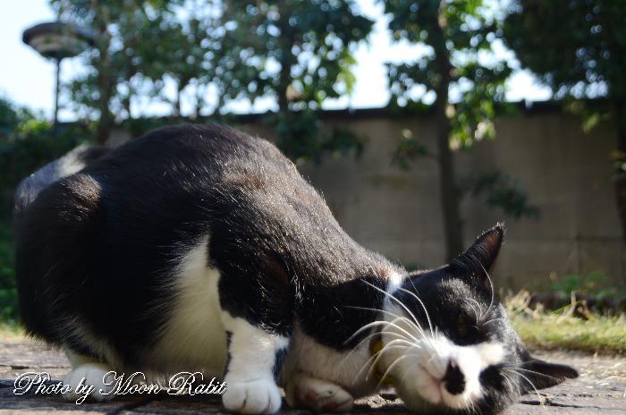 猫の表情 愛媛県西条市清水町