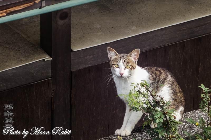 猫 愛媛県西条市神拝