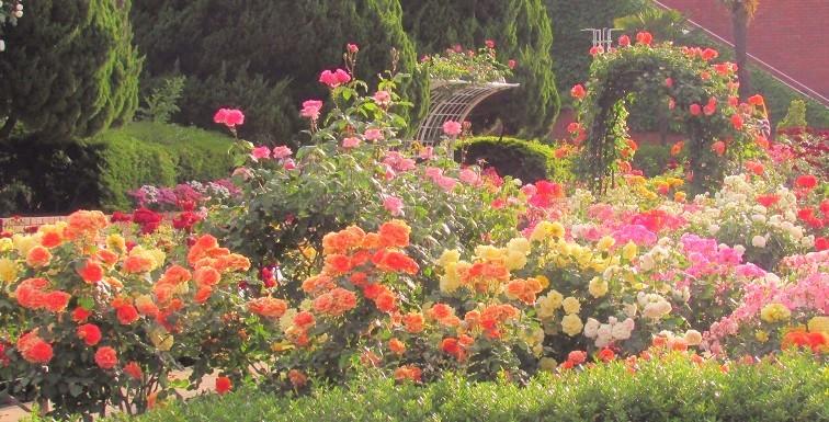 flowergarden190519-106.jpg