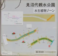 kawasemi190503-201.jpg