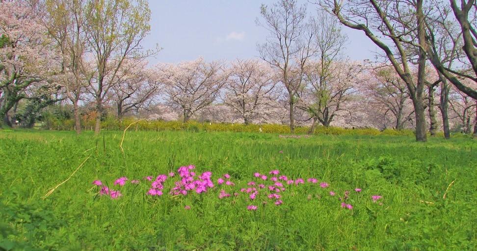sakurasou190407-122.jpg