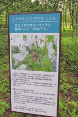 yamagata190812-202.jpg
